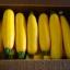 ฟักทองซูชินี่ โกลเด้น - Golden Zucchini Squash thumbnail 4