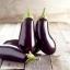 มะเขือฟลอริด้า - Florida Market Eggplant thumbnail 1