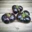 มะเขือเทศแบล็คบิวตี้ - Black Beauty Tomato thumbnail 2