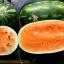แตงโมเทนเดอร์สวีส - Tendersweet Orange Watermelon thumbnail 1