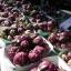 อาติโช้ค สีม่วง - Purple artichoke thumbnail 4