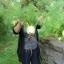 ผักชีลาวฝรั่ง - Florence Fennel Herb thumbnail 2