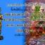 ไอ้ไข่ เด็กวัดเจดีย์ รุ่นสรงน้ำ 58 วัดเจดีย์ ลอคเก็ตใหญ่ + เล็ก thumbnail 24