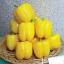 พริกหวานแคลิฟอร์เนียสีเหลือง - Yellow Sweet Pepper thumbnail 1