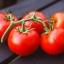 มะเขือเทศพันธุ์อะไลแคนที - Alicante Tomato thumbnail 4