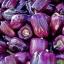 พริกหวานแคลิฟอร์เนียสีม่วง - Purple Sweet Pepper thumbnail 1