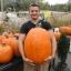 (Whole 1 oz) ฟักทองฮาโลวีน พันธุ์คอนเนคติคัท ฟิลด์ - Connecticut Field Pumpkin thumbnail 4