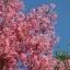 ต้นฟลามิงโก้ ซองละ 5 เมล็ด thumbnail 1