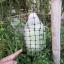 มะเขือยักษ์หยกภูพาน - Yok-Poo-Parn Giant Eggplant thumbnail 4