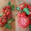 มะเขือเทศ คอสโตลูโต - Costoluto Tomato thumbnail 3