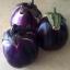 มะเขือม่วงไวโอเลต - Violet eggplant thumbnail 1