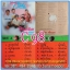 C1-117 แผ่นเสียง เพลงไทยสตริงเก่า สภาพสวย แผ่นสะสม ส่วนใหญ่ไม่เคยลงเข็ม เพลงฟัง มากันทุกค่าย RS,GRAMMY,ONPA,MUSIC TRAIN,SOUND SCALE,EMI thumbnail 103