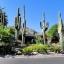กระบองเพชร ซากัวโร่ - Arizona Saguaro Cactus Seeds thumbnail 5