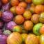 มะเขือตุรกี - Turkish Orange Eggplant thumbnail 4