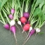 เรดิชสีม่วง - Purple Plum Radish thumbnail 6
