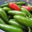 พริกจาราปิโน่ - Jalapeno Mexican Pepper thumbnail 1