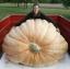 (Whole 1 oz) ฟักทองยักษ์ พันธุ์แอตแลนติก - Dill Atlantic Giant Pumpkin thumbnail 4