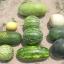 แตงโม ฟอริด้าใจแอ้น - Florida Giant Watermelon thumbnail 3