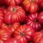 มะเขือเทศ คอสโตลูโต - Costoluto Tomato thumbnail 1