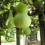น้ำเต้าเซียน(พระถังซำจั๋ง) - Bottle Gourd thumbnail 2
