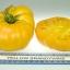 มะเขือเทศ แบนดี้ไวน์สีเหลือง - Yellow Brandywine Tomato thumbnail 5