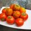 มะเขือตุรกี - Turkish Orange Eggplant thumbnail 3
