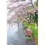 ปั่น ญี่ปุ่น thumbnail 2