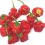 พริกจาไมก้า สีแดง - Red Jamaican Scotch Bonnet Pepper thumbnail 3