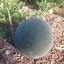 แตงโมดำ ชูก้าเบบี้ - Sugar Baby Watermelon thumbnail 3