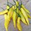พริกเลม่อนดรอป - Lemon Drop Pepper thumbnail 3