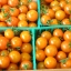 มะเขือเทศซันโกลด์ - Sun Gold Tomato F1 thumbnail 2
