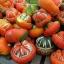 (Whole 1 Oz.) ฟักทองหมวก - Turk's Turban Pumpkin thumbnail 3