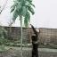 ต้นคะน้ายักษ์ ซองละ 5 เมล็ด thumbnail 1