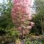 ต้นฟลามิงโก้ ซองละ 5 เมล็ด thumbnail 3
