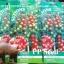 มะเขือเทศ สวีทมิลเลี่ยน - Sweet Million Tomato F1 thumbnail 4