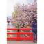 Japan Trip จูบุและคันไซ thumbnail 10