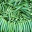 กระเจี๊ยบมอญเขียว - Green Okra thumbnail 1
