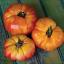 มะเขือเทศเรนโบว์ - Rainbow Tomato thumbnail 3