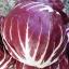แรดิชิโอ - Radicchio Rouge de Verona thumbnail 2