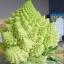 บล็อคโคลี่ เจดีย์ - Romanesco Broccoli thumbnail 3