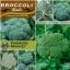 บล็อคโคลี่ พันธุ์ วอทัม29 - Waltham29 Broccoli thumbnail 3