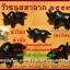 วัวธนูมหาลาภ ปี 2559 thumbnail 1