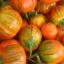 มะเขือตุรกี - Turkish Orange Eggplant thumbnail 2