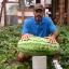 แตงโม พันธุ์จูบิลี - Jubilee Watermelon thumbnail 1