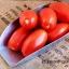 มะเขือเทศโรม่า - Red Roma Tomato thumbnail 2