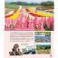 ตะลุย ฮอกไกโด [edition 2] Hokkaido thumbnail 7