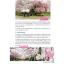 Japan Kyushu เที่ยวญี่ปุ่น ฉบับตะลุย คิวชู ปรับปรุงใหม่ ครบ 7 จังหวัด thumbnail 20