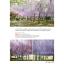 Japan Kyushu เที่ยวญี่ปุ่น ฉบับตะลุย คิวชู ปรับปรุงใหม่ ครบ 7 จังหวัด thumbnail 21