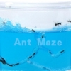 VB008 ANT WORLD SIZE L