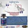 Glucasamine (กลูโคซามีน) คืออะไร???
